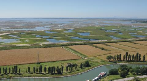 immagine della fitodepurazione nella laguna di Venezia